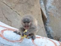monkey_temple_8221