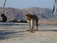 monkey_temple_8224