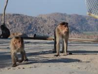 monkey_temple_8225