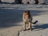 monkey_temple_8226