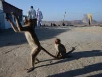 monkey_temple_8227