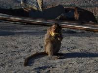 monkey_temple_8228