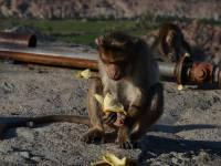 monkey_temple_8229