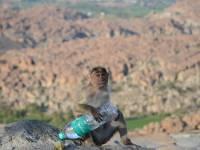 monkey_temple_8231