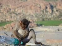 monkey_temple_8232