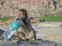 monkey_temple_8233