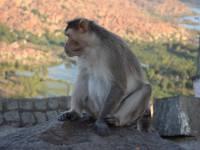 monkey_temple_8257