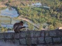 monkey_temple_8260