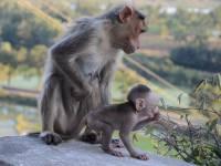 monkey_temple_8268