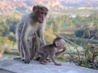 monkey_temple_8269