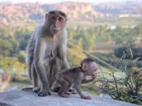 monkey_temple_8270